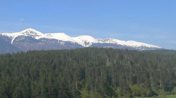 Bulgarian forest
